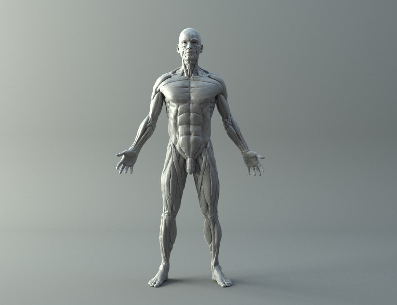 Ecorche for printing 3D print model