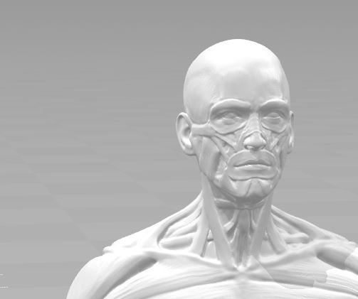 Ecorche for printing 3D print modelEcorche for printing 3D print model