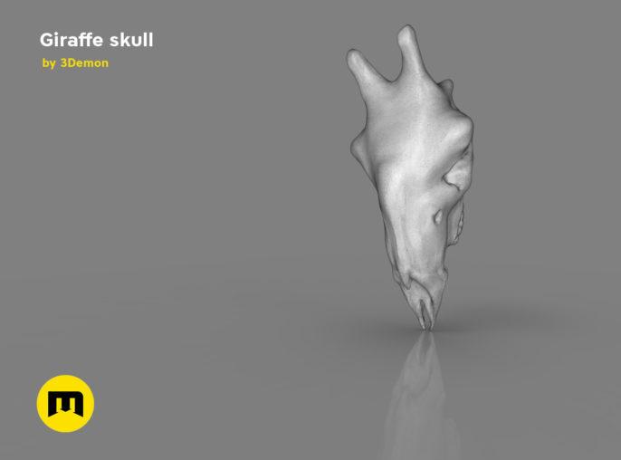 Giraffe Skull 3D print model